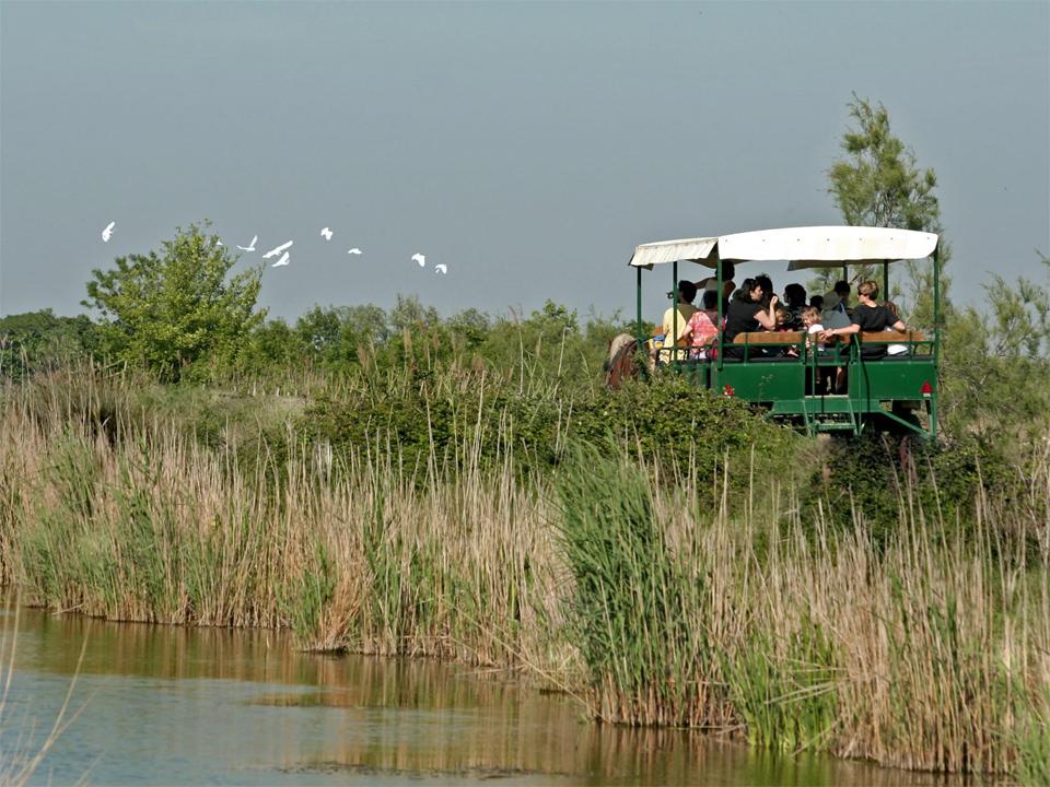 Réserve nationale naturelle des Marais du Vigueirat - Observation des oiseaux de Camargue